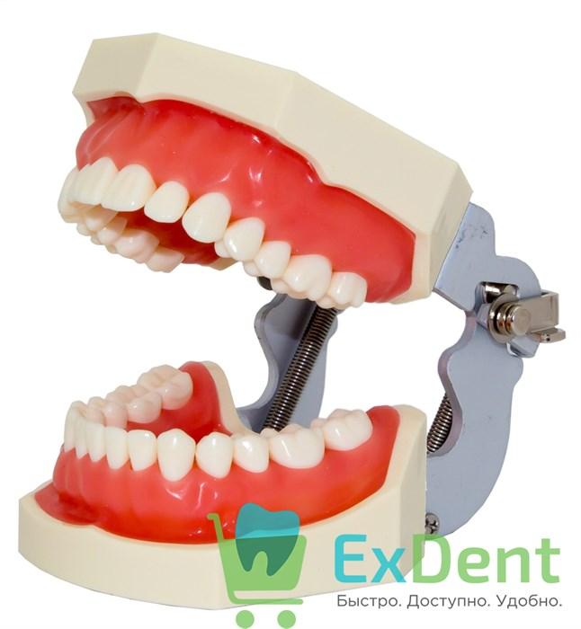 Фантом - учебная модель зубов - фото 19900