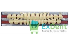 Гарнитур акриловых зубов C2, T3 Gloria New Ace (28 шт)