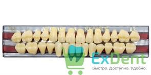 Гарнитур акриловых зубов A3, TL5 Gloria New Ace (28 шт)