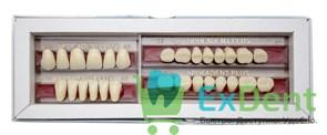 Гарнитур акриловых зубов А1 F62H-0/11D 1/62H-1/62D - Spofadental Plus, трехслойные (28 шт)