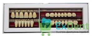 Гарнитур акриловых зубов C2 62-0/11-1/62 - Spofadental Plus, трехслойные (28 шт)