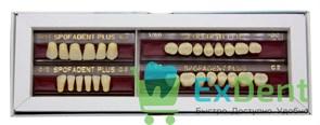 Гарнитур акриловых зубов C2 1/21-0/2-1/60 - Spofadental Plus, трехслойные (28 шт)