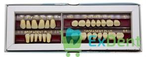 Гарнитур акриловых зубов C2 1/37-0/5-1/62 - Spofadental Plus, трехслойные (28 шт)