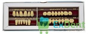 Гарнитур акриловых зубов В3 1/37-0/5-1/62 - Spofadental Plus, трехслойные (28 шт)