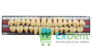 Гарнитур акриловых зубов A3,5, TL5 Gloria New Ace (28 шт)