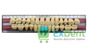 Гарнитур акриловых зубов C4, T3 Gloria New Ace (28 шт)