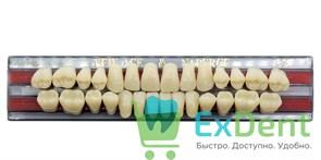 Гарнитур акриловых зубов C3, T3 Gloria New Ace (28 шт)