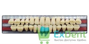 Гарнитур акриловых зубов C3, T5 Gloria New Ace (28 шт)