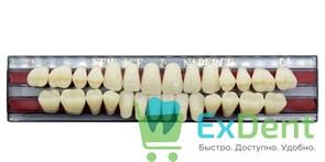 Гарнитур акриловых зубов C1, T5 Gloria New Ace (28 шт)