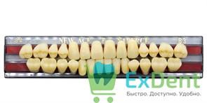 Гарнитур акриловых зубов B3, S4 Gloria New Ace (28 шт)