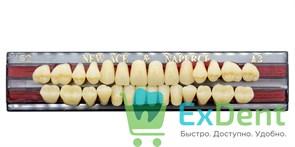 Гарнитур акриловых зубов A3, S2 Gloria New Ace (28 шт)